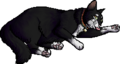 Benny.kittypet