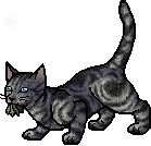File:Jayfeather.mca.png