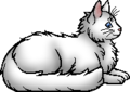 Cloudtail.elder