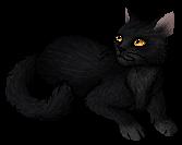 Mole (Cat)