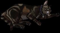Bugeater.kittypet
