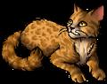 Leopardstar.star