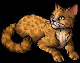 File:Leopardstar.star.png