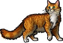 Star Flower | Warrior Cats - Ancients | Pinterest | Star flower ...