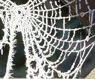File:Cobwebs.jpg