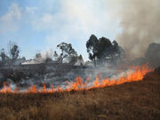 Small-grass-fire