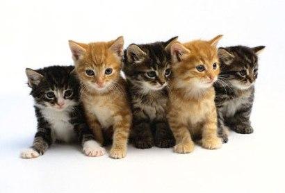 File:Kittens2.jpg