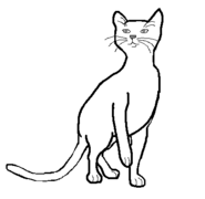 CatLayout13