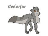 Cedarfur ShadowClan