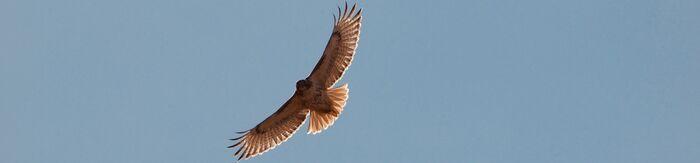 Hawkrushbackground