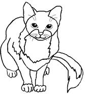 CatLaout9