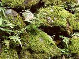 Mosspaw (RiverClan)