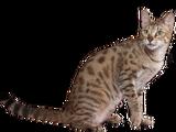 Lynxfur