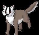 Badgerbelly