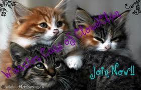 Warrior cats code