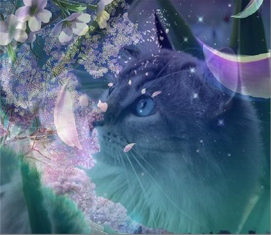 Lilacstar