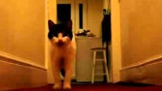 The cat with an english accent