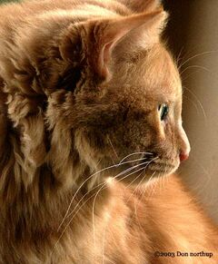 7753-great-ginger-cats