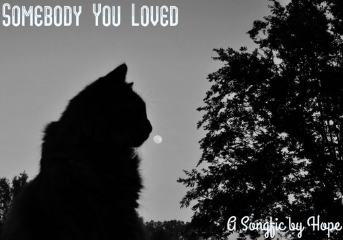Somebody You Loved Cover