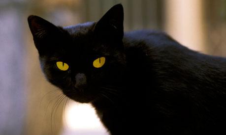 A-black-cat-007.jpg 460×276