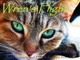 Wren's Flight