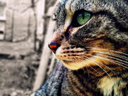 Cat stare by meadhag-d51sho7