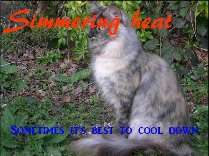 Wfw simmering heat