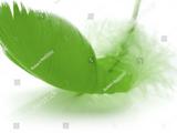 Leaffeather