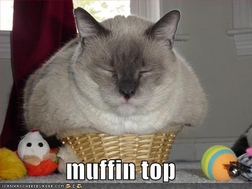 image funny pictures fat cat in basket funny fat cats jpg