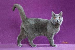 File:Cat16.jpg