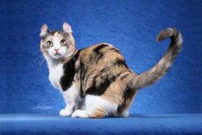 File:Cat24.jpg