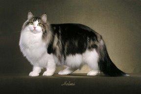 File:Cat34.jpg