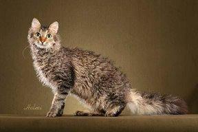 File:Cat28.jpg