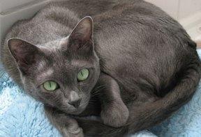 File:Cat25.jpg