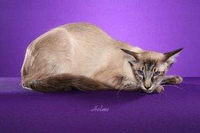File:Cat7.jpg