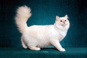 File:Cat9.jpg