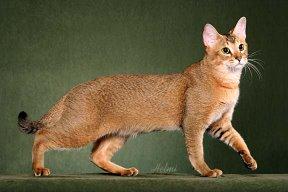 File:Cat17.jpg