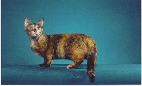 File:Cat30.jpg