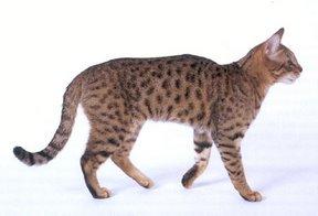 File:Cat15.jpg