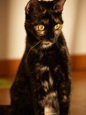 File:Brown cat.jpg