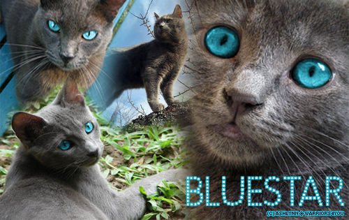 File:Bluestar4.png