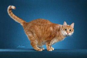File:Cat22.jpg
