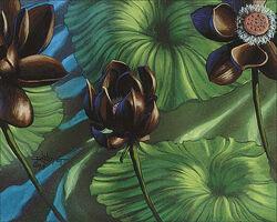 Lotus Blossom 640