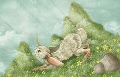 Miraj bunny rabbit