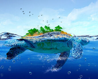 Turtle-Island-PSD-L copy 9411