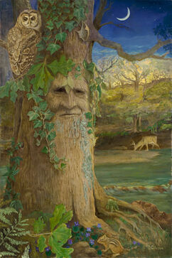 Wise Old Oak. Joyce Gibson