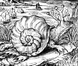 Sarmatian Sea Snail-1-