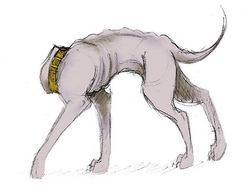 Yeth Hound (The headless dog of affection by eitherwise)