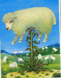 Agneau plante borametz bartometz barmotez barbary lamb tree vegetable-1-