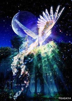 Bird of Paradise Kagaya 2